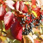 """Fall Berries"" by rogardphoto"