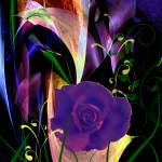 """New Rose"" by elayne"