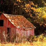 """Little Red Shed."" by ToddRollins"