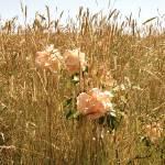 """Rose Among Weeds"" by ggrunberg"