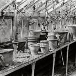 """""""Terracotta Pots"""" by celtxian"""