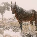 """brown sugar in blizzard wild horse 2005"" by jnphotography"
