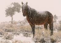 brown sugar in blizzard wild horse 2005