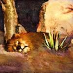 """""""lion sleeps"""" by eyecontact"""