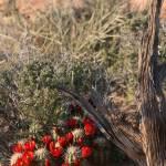 """""""Desert Bloom"""" by jen_vanhaur"""
