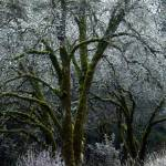 """""""Frost"""" by NaturesGiftPhotography"""