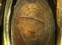 KW.Natures Thumbprint
