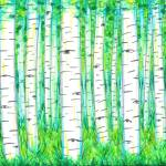 """Birch Wood"" by ADrawingADay"