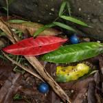 """""""Rainforest litter"""" by Jek"""