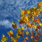 """""""Autumn Sky"""" by Jek"""