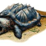 """Alligator Snapping Turtle"" by inkart"