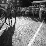 """""""Mule Auction 6.16.2007"""" by notleyhawkins"""