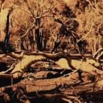 """The Tree Wor"" by Pantera"