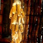 """Hanging Corn"" by carloslopezdrums"