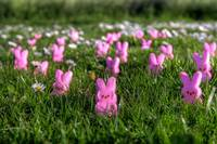 a flock of easter peeps