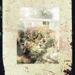 """Dream Garden"" by polaroid6"
