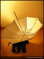 Golden Umbrella