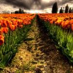 """""""Oranje"""" by kjellarsen"""