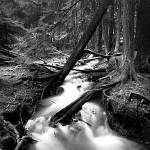 """Liberty Creek Pinhole #1"" by steveydphoto"