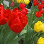 """""""More Rockefeller Flowers"""" by PhotScot"""