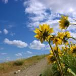 """""""Desert Flowers"""" by Jes"""