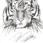 """Tiger"" by drey80"