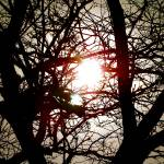 """""""Tree Branches"""" by GG-SMITH"""