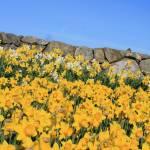 """""""Spring"""" by knutb"""