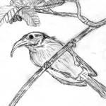 """""""Bird on Branch"""" by CLM"""