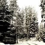 """""""New Snow"""" by sfgfan10"""