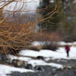 """""""Winter Scene"""" by sfgfan10"""