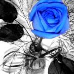 """Blue Rose"" by aceofdymondz"