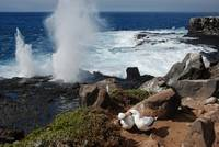 blow hole chitchat
