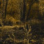 """""""walking with a velvet tread on the edge of my wood"""" by Woodsman"""