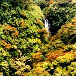 """Tropical Splendor"" by rayjacque"