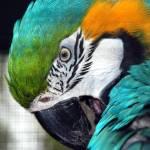 """""""Parrot"""" by JSiraj"""