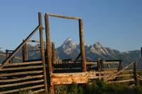 Grand Teton Corralled