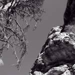 """Desert Treescape"" by PadgettGallery"