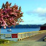"""Coupeville Wharf With Tree"" by gopnw"