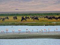 Ngorongoro Crater Wildlife