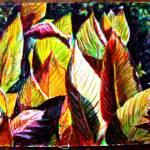 """""""Sunlit Foliage"""" by shantharam"""
