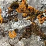 """""""Lichen"""" by NeilRossignol"""