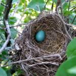 """Robins Nest"" by NeilRossignol"