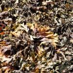 """Seaweed"" by NeilRossignol"