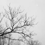 """Nevermore"" by VTDarkStar"