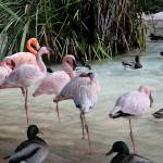 """Flamingo Amigos Ocho"" by jmjm"