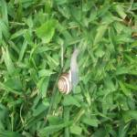 """Lonesome Garden Snail"" by TTsTreasures"