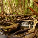 """Forest in Tierra del Fuego"" by Irudi"