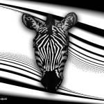 """""""Zebra"""" by ArtnFun"""