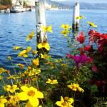 """Luzern Flowers"" by lakewentworth"